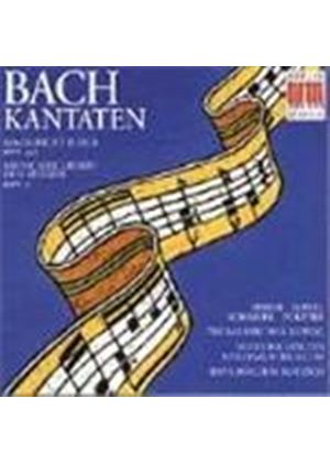 Bach: Cantatas, BWV10 and 243