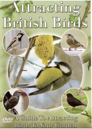 Attracting British Birds
