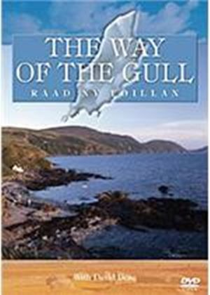 Way Of The Gull