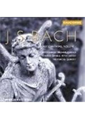Bach: Early Cantatas