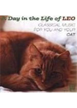 A Day in the Life of Leo - Music for you & your cat