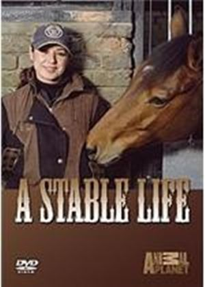 Stable Life - Series 1