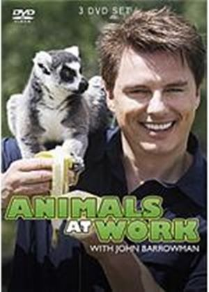 Animals At Work - With John Barrowman