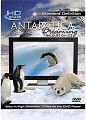 Antarctica Dreaming - Wildlife On Ice