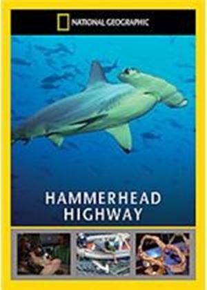 National Geographic - Hammerhead Highway
