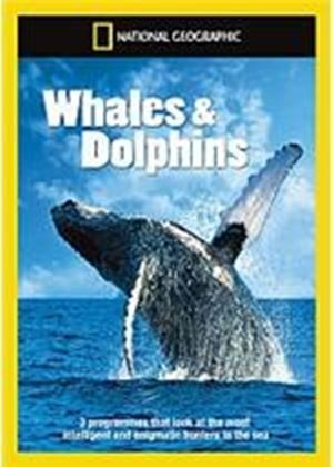 National Geographic - Whales & Dolphins Collection (Kingdom of the Blue Whale / Humpbacks: Inside the Pod / Dolphins: The Wild Side)