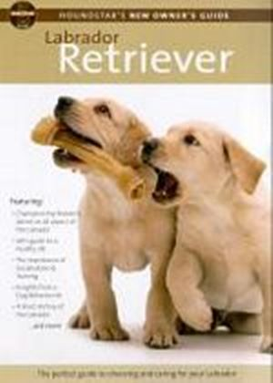 Houndstars New Owners Guide To The Labrador Retriever