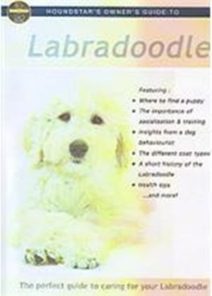 Owners Guide To Your Labradoodle