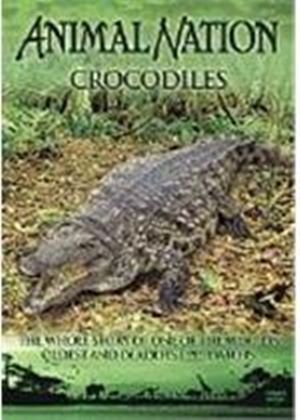 Animal Nation - Crocodiles - The Whole Story