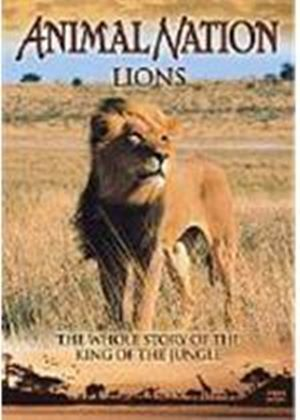 Animal Nation - Lions - The Whole Story