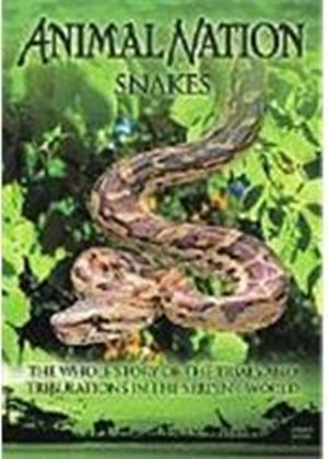 Animal Nation - Snakes - The Whole Story