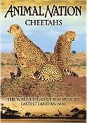 Animal Nation - Cheetahs - The Whole Story