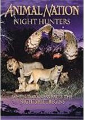 Animal Nation - Night Hunters