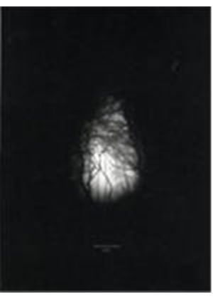 Nucleus Torn - Knell (Music CD)