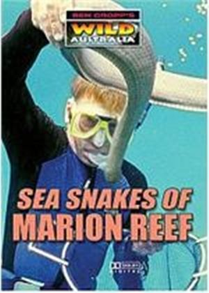Sea Snakes Of Marion Reef
