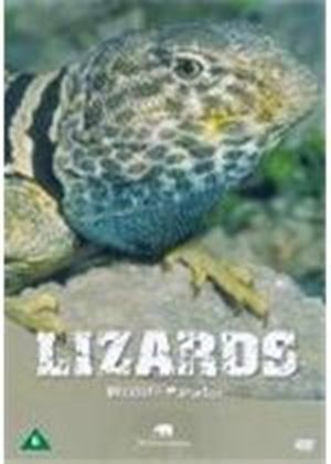 Wildlife Paradise - Lizards
