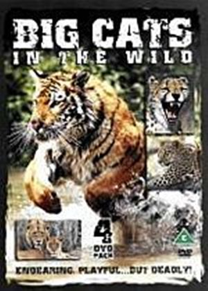 Big Cats In The Wild (Four Discs)