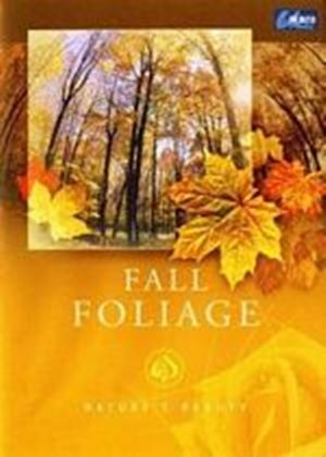 Natures Beauty - Fall Foliage