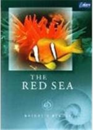 Nature's Beauty - The Red Sea