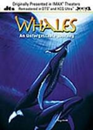 Whales - An Unforgettable Journey (XCQ)